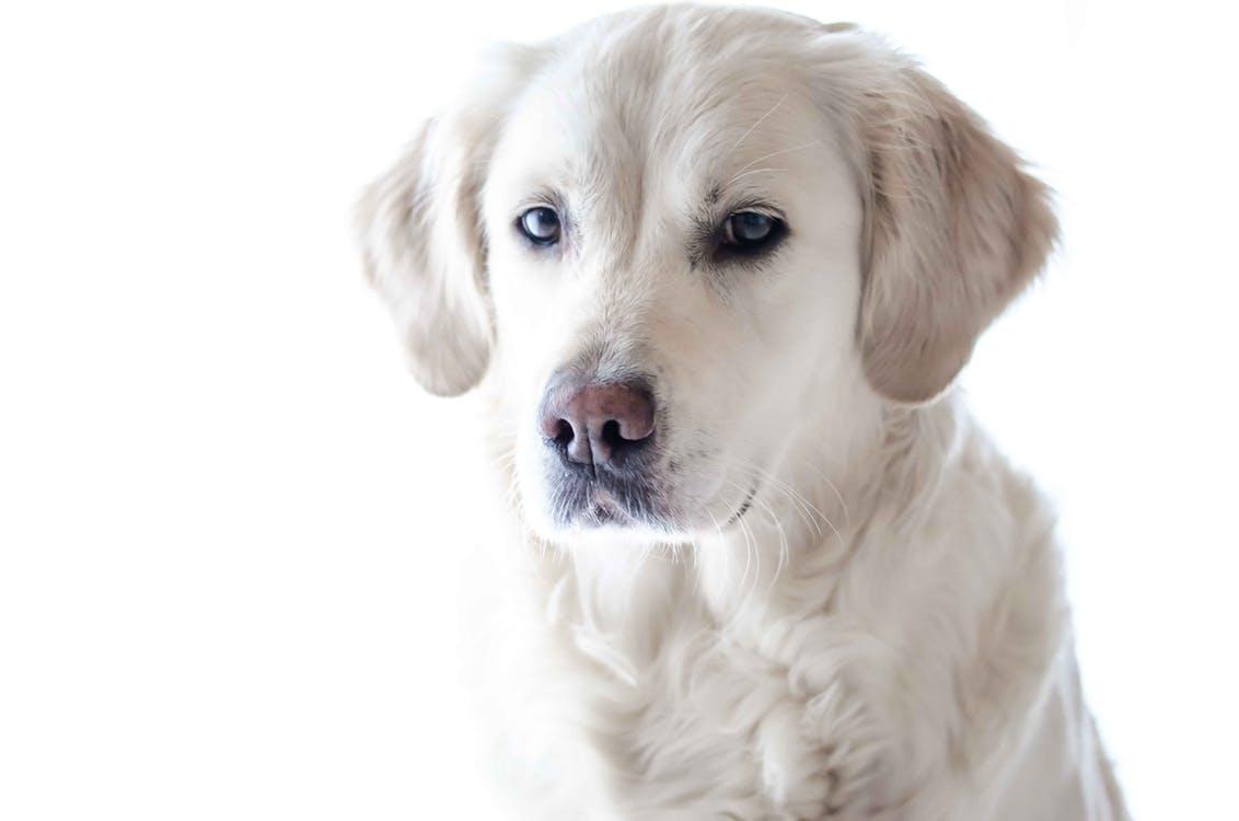 wildlife-photography-pet-photography-dog-animal-159541